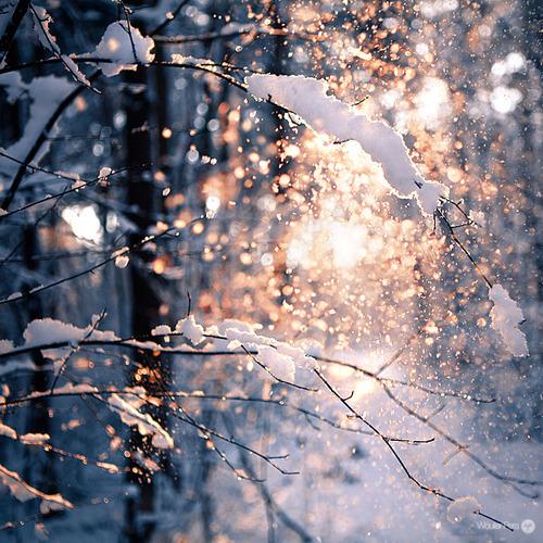 Прогуляться в зимнем лесу - список дел на зиму